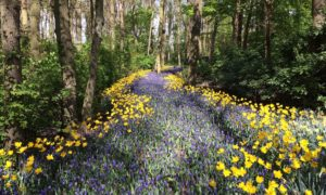 Flowers winding through a woodland