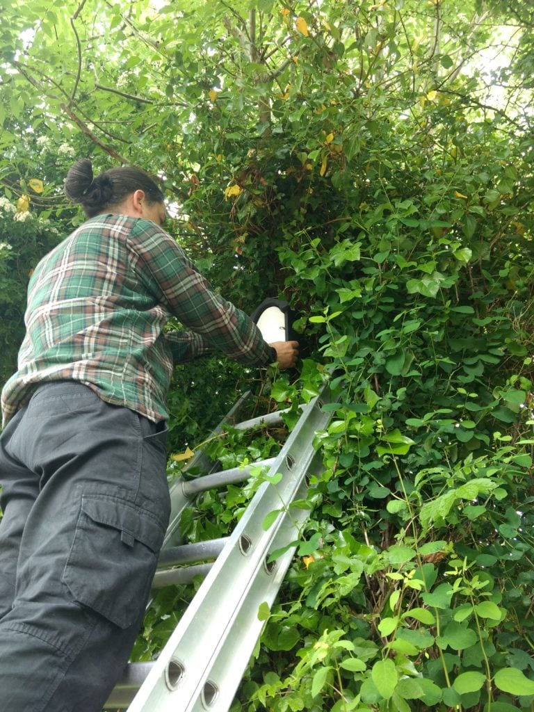Installation of bat boxes