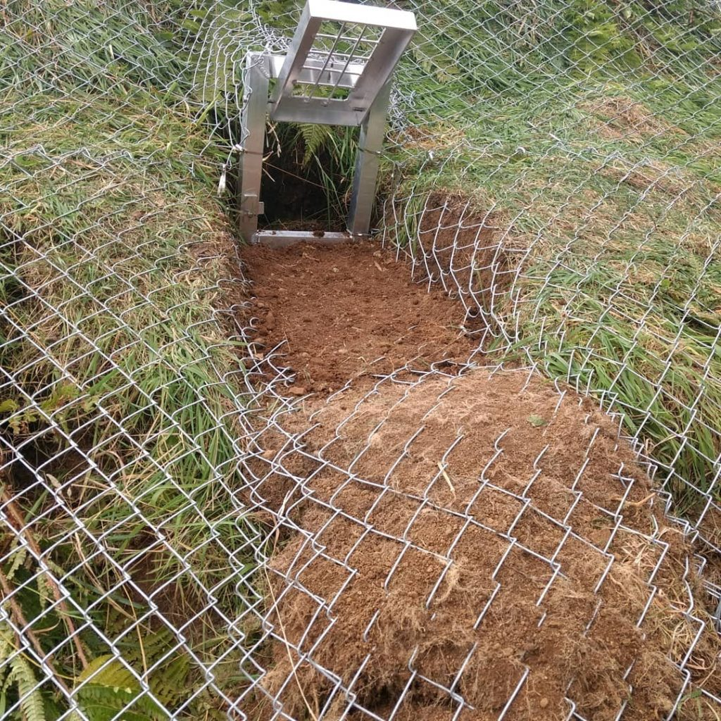 Badger sett exclusion under licence