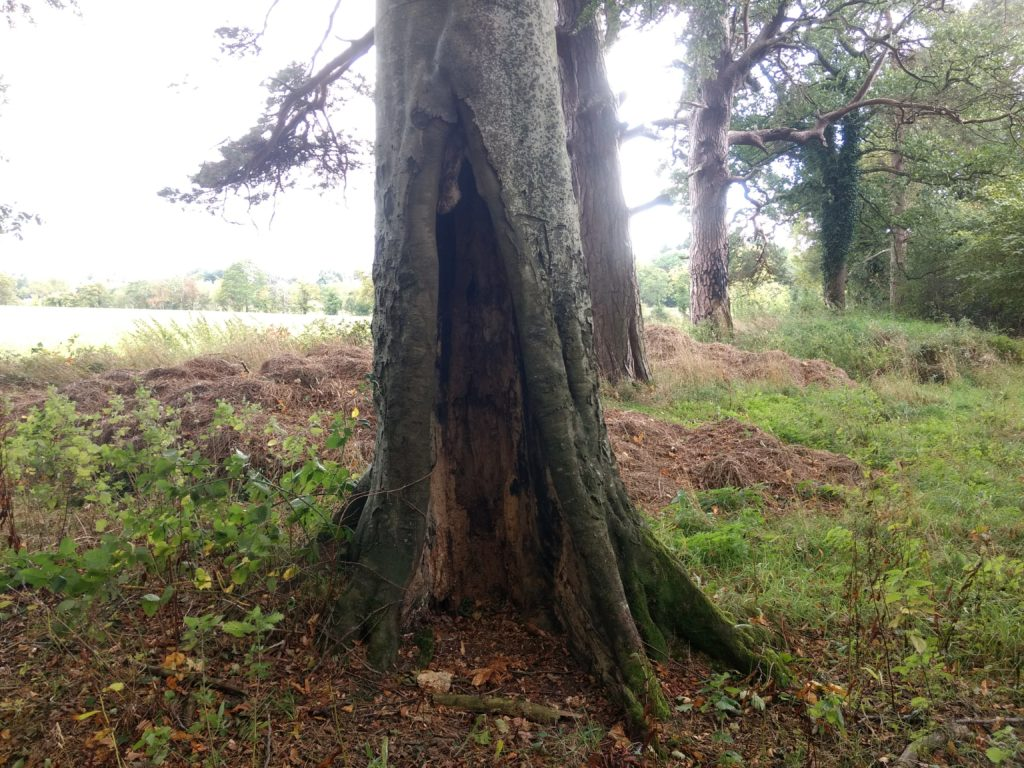 Tree with bat roosting potential