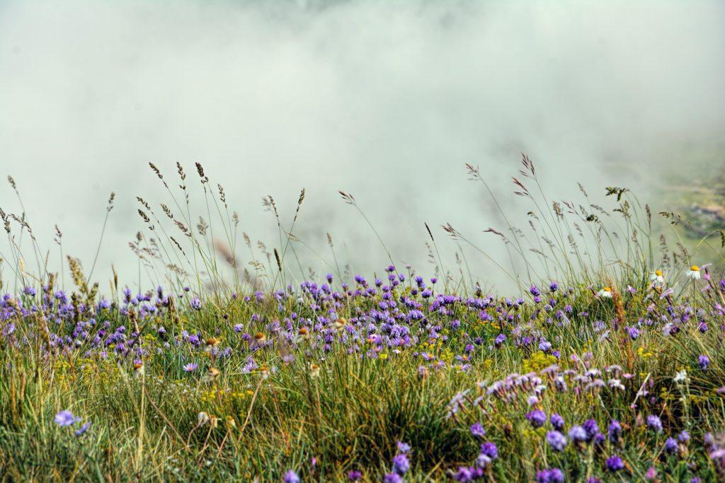 Species-rich grassland