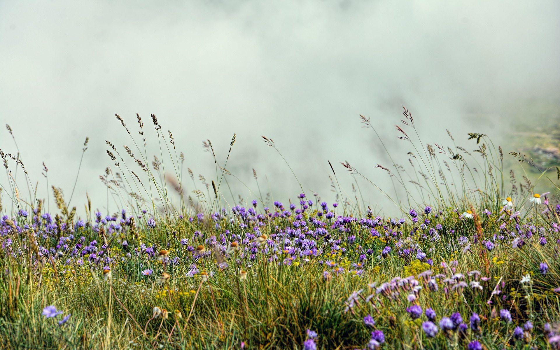 Species-rich grassland mapped during a survey