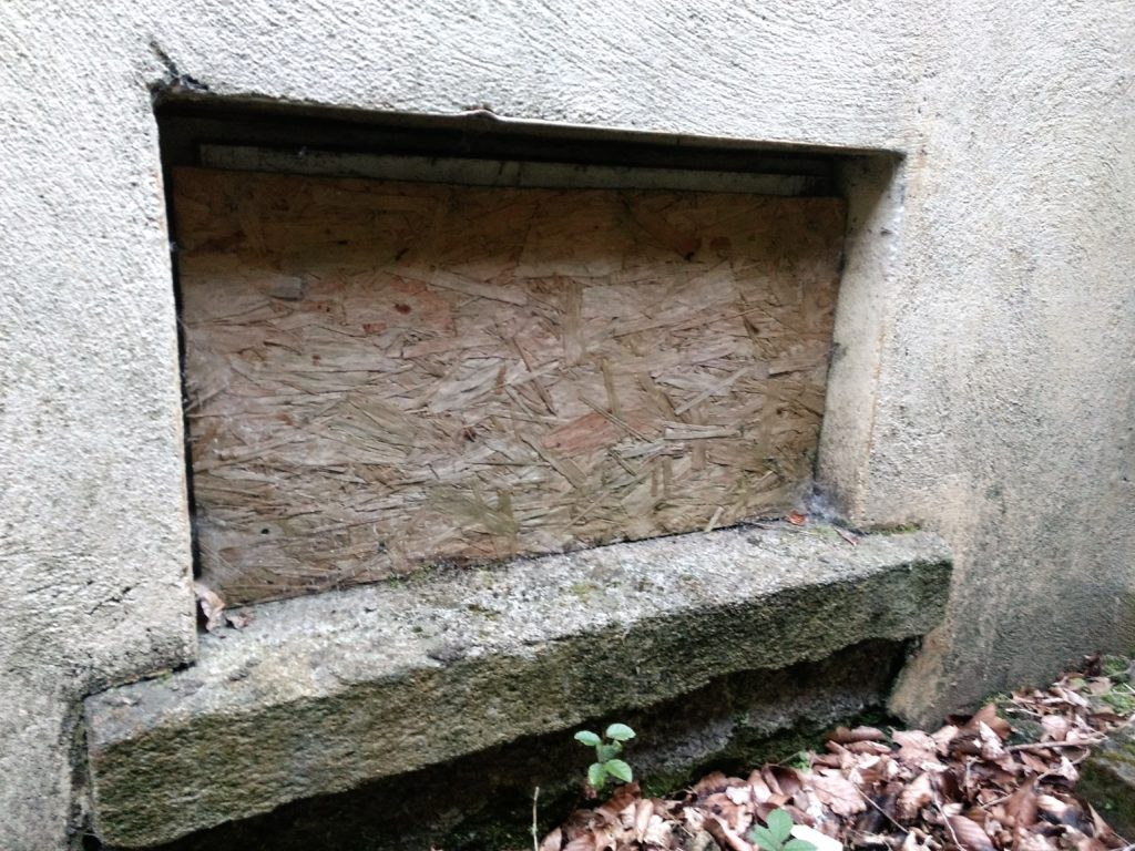 Basements offer ideal conditions for hibernating bats